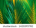 green tropical palm leaves on... | Shutterstock . vector #1420395782