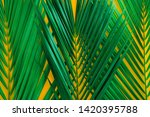 green tropical palm leaves on... | Shutterstock . vector #1420395788