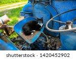 Domestic Cat Lying In A Blue...