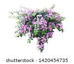 Purple Flower Plant Isolated...