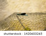 Stock photo beautiful blue dragonfly on a fishing net beautiful dragonfly sitting on a metal fishing cage 1420603265
