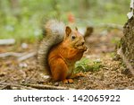 Squirrel Eating Food On The...