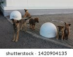 homeless puppies with mom near...   Shutterstock . vector #1420904135