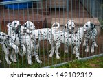 dalmatian puppies at the breeder | Shutterstock . vector #142102312