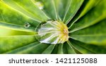 macro large raindrop on a leaf... | Shutterstock . vector #1421125088