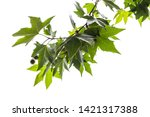 Green Leaves And Fruits On A...