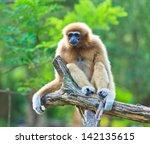 gibbon   Shutterstock . vector #142135615