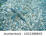 starfish on the seabed ... | Shutterstock . vector #1421388845