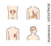 healthy human organs color... | Shutterstock .eps vector #1421479418