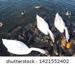 Japan Fujiyama Fuji Lake Animals