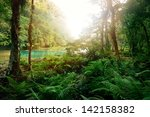 Mysterious Mayan Jungle In The...