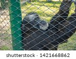 monkey in the aviary in the zoo | Shutterstock . vector #1421668862