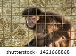 monkey in the aviary in the zoo | Shutterstock . vector #1421668868