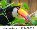south american mlticolored toco ... | Shutterstock . vector #1421668895