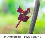 Beautiful Red Dragonfly...