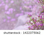 pink flowers of rhododendron...   Shutterstock . vector #1422375062