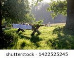 Wooden Table Under Oaks With...