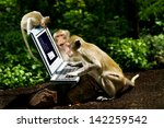 Monkeys Play Computer.