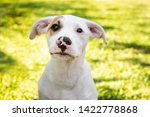 Small photo of cute puppy playing outside. green grass, sunny day. baby mutt portrait.