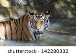tiger in water. | Shutterstock . vector #142280332