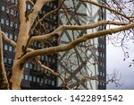 yellow brown tree trunk and... | Shutterstock . vector #1422891542
