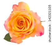 Orange Rose  Isolated On White...