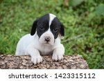 Stock photo puppy leaning on a log with sweet puppy eyes 1423315112