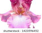 Element Of Pink Iris Flower...