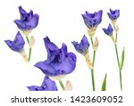 Set Of Blue Iris Buds With Long ...