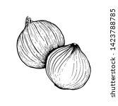 onion hand drawn vector...   Shutterstock .eps vector #1423788785
