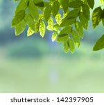 green leaves   | Shutterstock . vector #142397905