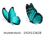 Stock photo  blue butterfly natural insect isolated on white background 1424113628