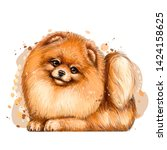 Pomeranian   Small German Spitz ...