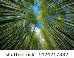 Arashiyama Bamboo Forest  Kyot...