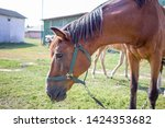 Small photo of Red horse close-up sidewise at farm countryside