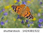 close up of painted lady...   Shutterstock . vector #1424381522