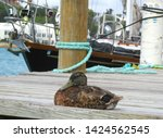 a duck is relaxing on a dock... | Shutterstock . vector #1424562545