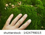 Adult's Hand Touches Forest Moss