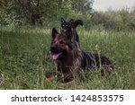 german shepherd and puppy...   Shutterstock . vector #1424853575