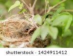 close up one cute baby light...   Shutterstock . vector #1424911412