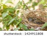 close up one cute baby light...   Shutterstock . vector #1424911808