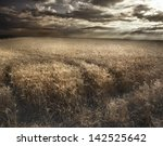 Field Of Wheat And Cloud In Th...