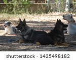 canine portrait  dog obedience...   Shutterstock . vector #1425498182