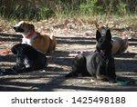 canine portrait  dog obedience...   Shutterstock . vector #1425498188