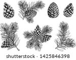 Pine Branches And Cones. Hand...