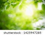 closeup nature view of green... | Shutterstock . vector #1425947285