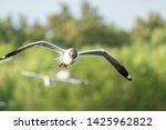 seagull bird flying on nature... | Shutterstock . vector #1425962822