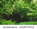 Scenic Natural Green Background ...