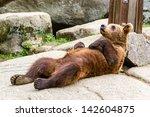 Bear Cub Relaxing And Sleeping...