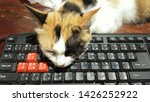 Stock photo three color cat lying on a computer keyboard 1426252922